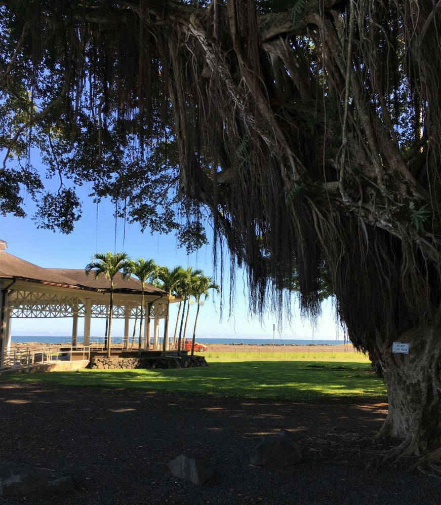 Banyan tree with pavillion and ocean in background, downtown Hilo, Hawaii