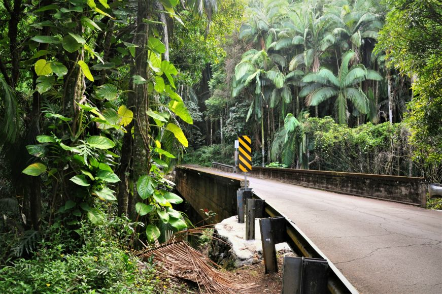 One lane bridge with lush tropical trees and greenery, Onomea Scenic Route, Big Island, Hawaii