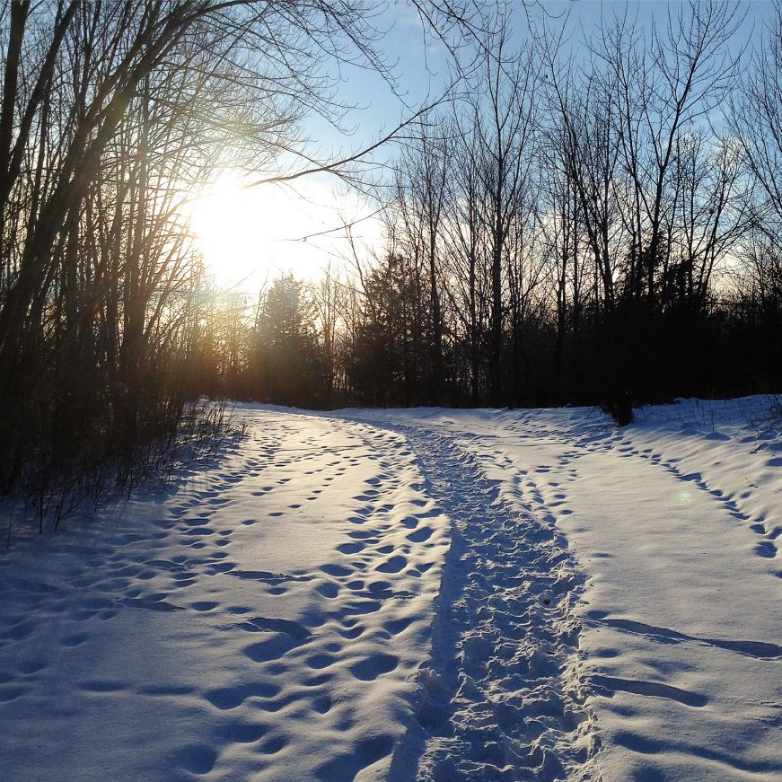 Snowy path in Elm Creek Park Reserve
